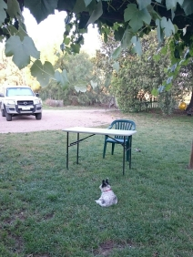 Mum and Steve went out for a birthday dinner and Jasper sat there watching and waiting.