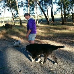 Funny old Jay dog trotting along.