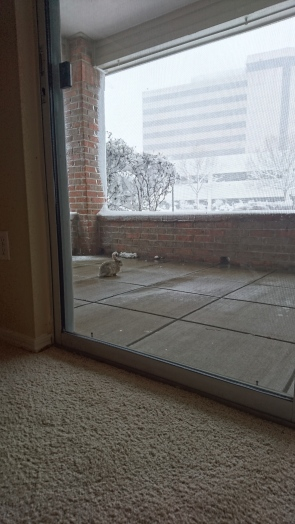 The friendly rabbit hid all day.